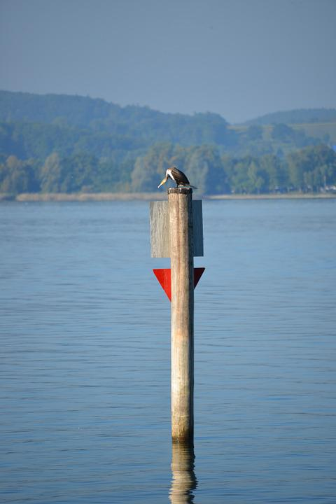 Heron, Bird, Lake Constance, Lake View, Lake, Water