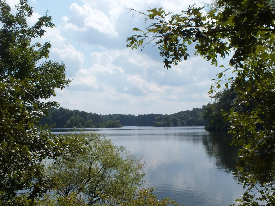 Lake, Water, Tree, Landscape, Natural, Bushes, Clouds