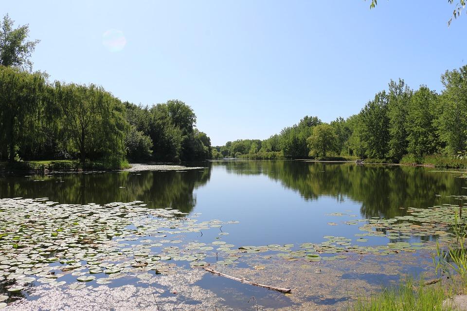Marsh, Lake, Water, Nature, Landscape, Sky, Trees