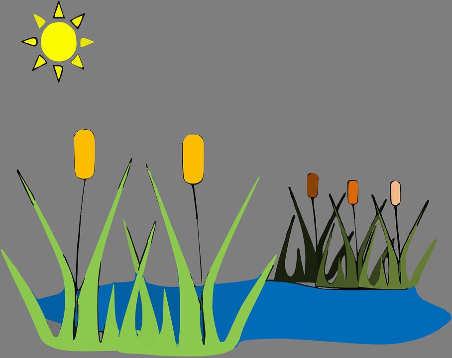 Reed, Pond, Lake, Water, Landscape