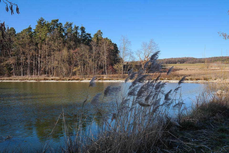 Pond, Trees, Water, Selloana, Nature, Waters, Lake