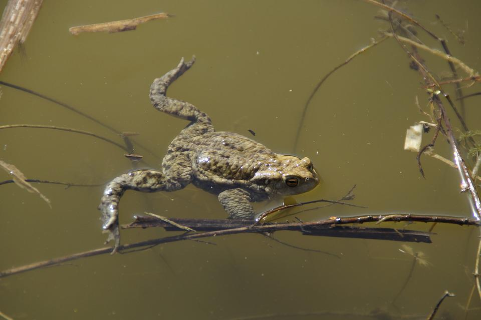 Animal World, Nature, Waters, Animal, Water, Pond, Lake