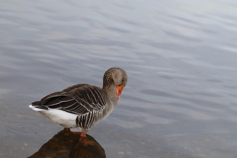 Bird, Nature, Lake, Waters
