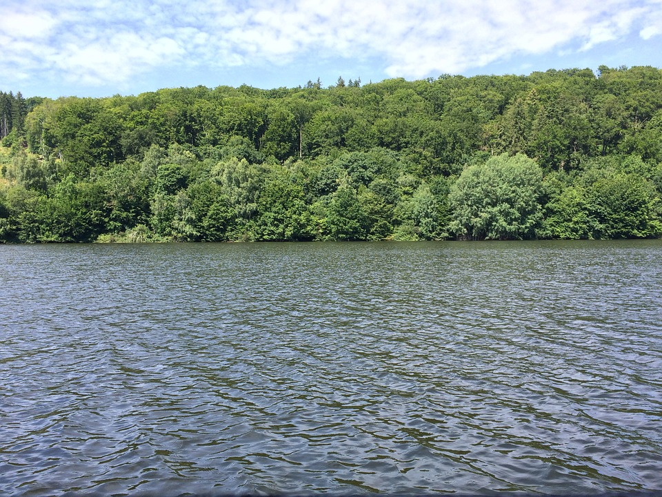 Lake, Forest, Bank, Summer, Water, Wendefurth