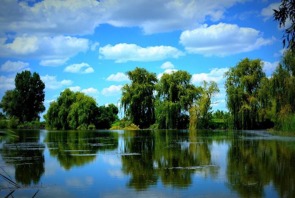 Lake, Willow, Cloud, Blue, Mirror