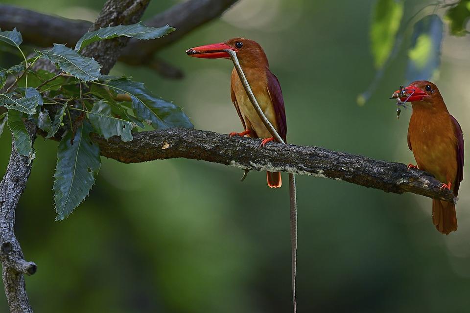 Birds, Summer Bird, Lakeside Fort, Snake, Nature