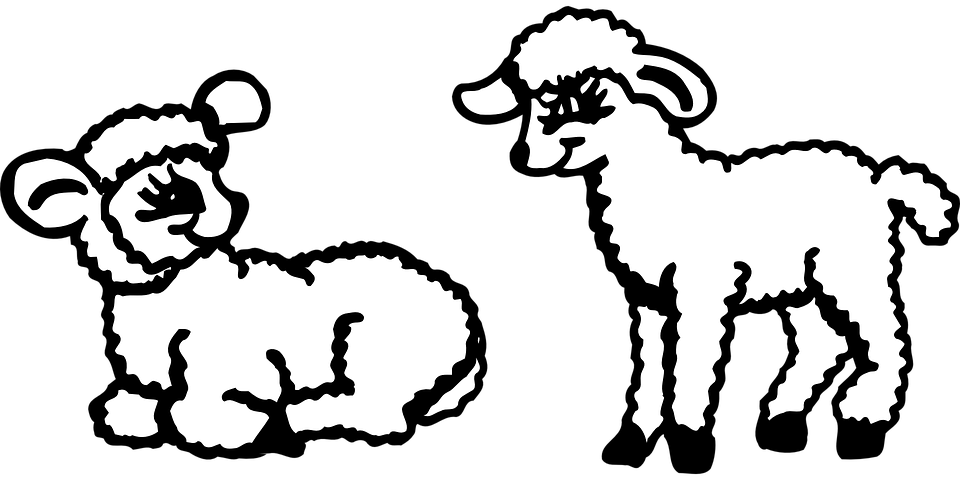 Animals, Two, Sitting, Standing, Lambs, Fluffy