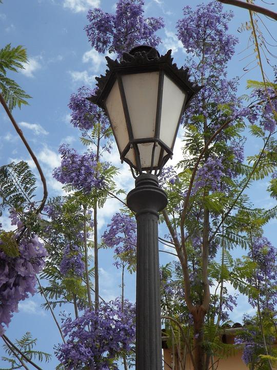 Lantern, Jacaranda, Mediterranean, South, Blossom, Lamp