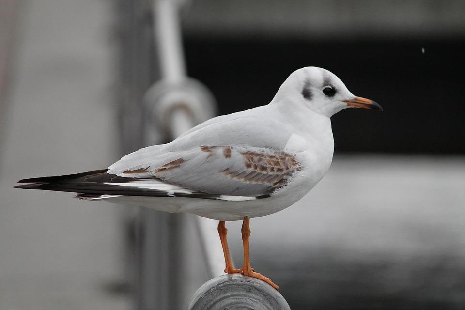 Lamp, Bird, Observes, Switzerland