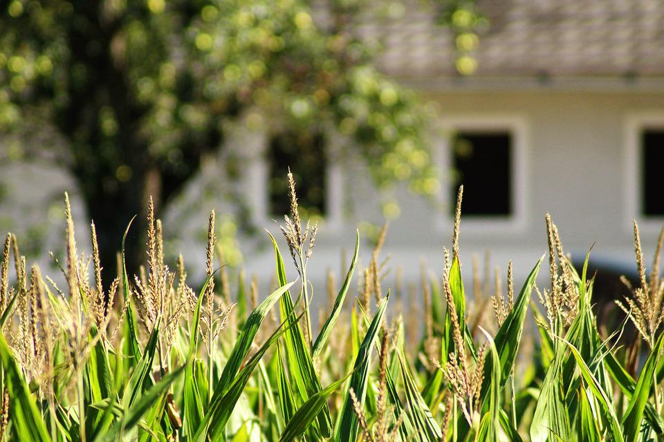 Farmhouse, Land, Welcome To, Agriculture, Harvest Time