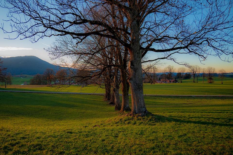 Fischbachau, Bavaria, Land, Trees, Tourism, Romantic