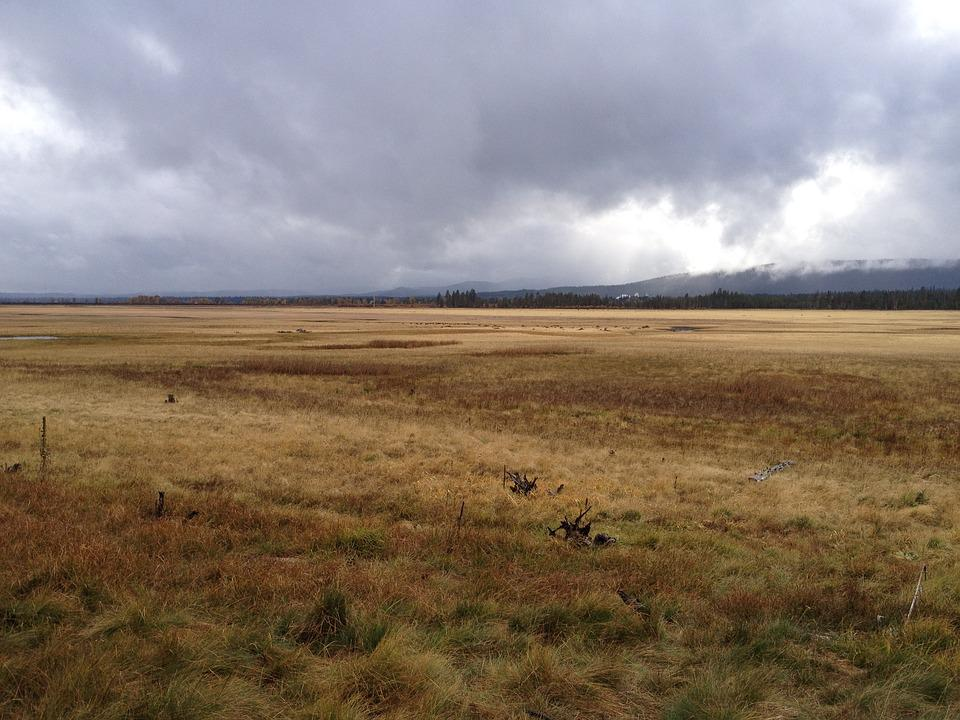 Field, Rain, Landscape, Meadow, Weather, Scene, Land