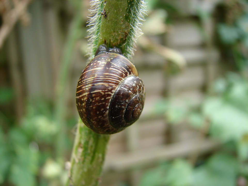 Snail, Shell, Nature, Animals, Land Snail