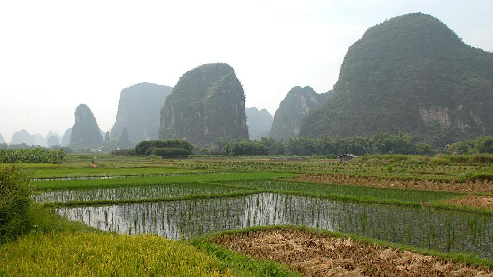 China, Yangshuo, Landscape, Agriculture, Paddy
