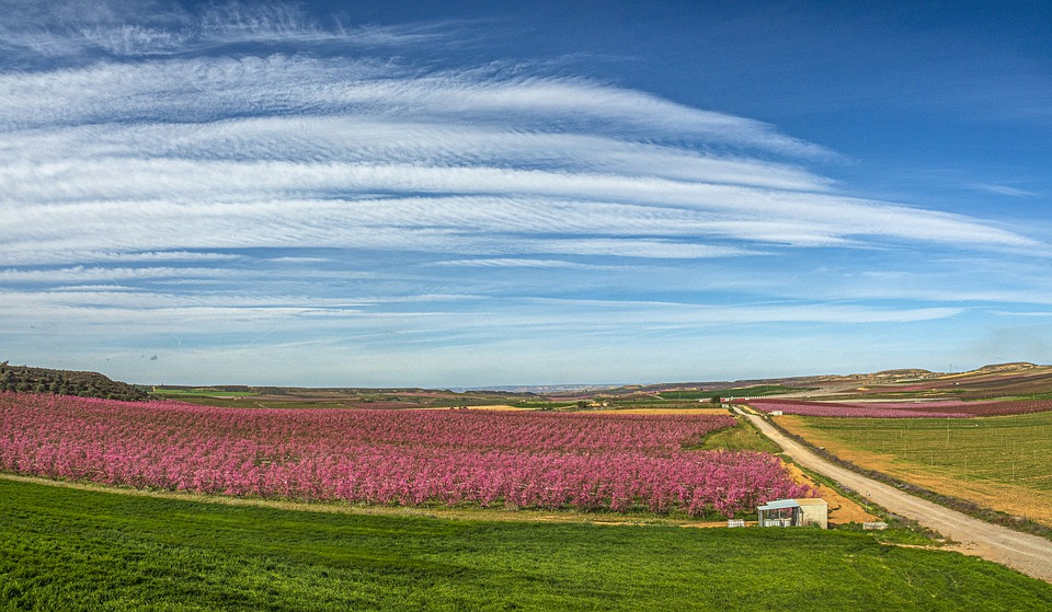 Rural Roads, Agriculture, Alfés, Fields, Landscape