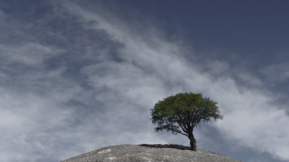 Andes, Tree, Argentina, Landscape, Wilderness, Scenery