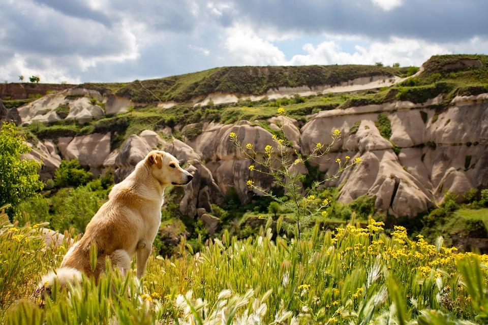 Hiking, Dog, Nature, Landscape, Animal, Walk, Hike