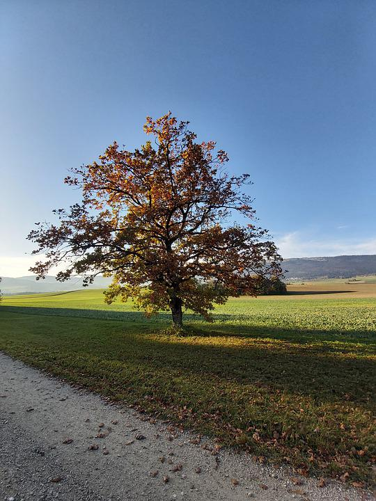 Autumn, Tree, Landscape, A Single Tree Standing