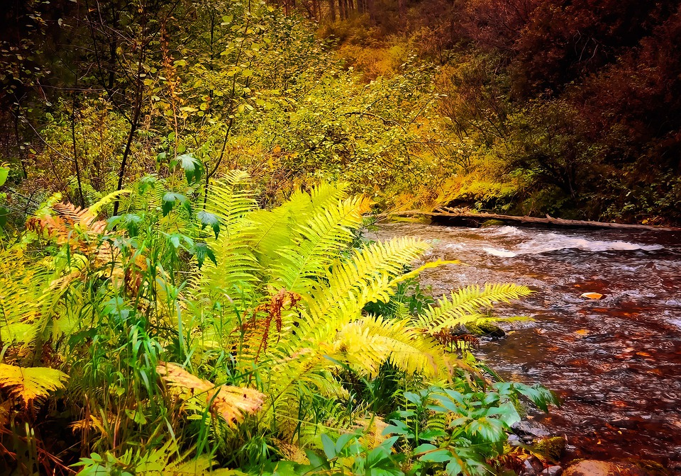 Fern, Plant, Autumn, Nature, Landscape, Fairy Tale