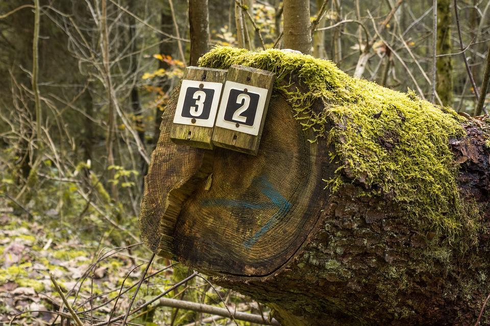 Shield, Directory, Forest, Moss, Green, Away, Landscape