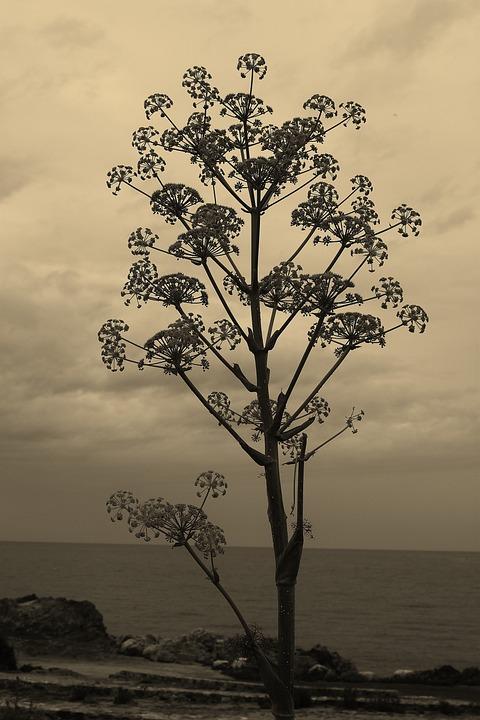 Ferrule, Corsican, Landscape, Beach