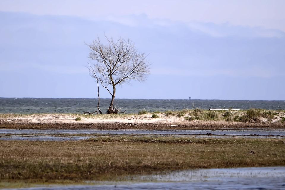 Sea, Water, Beach, Sky, Landscape, The Horizon, Nature