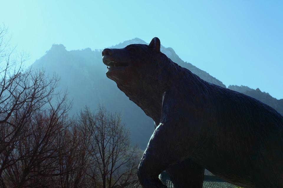 Bear, Mountain, Nature, Forest, Landscape, Wood, Sky
