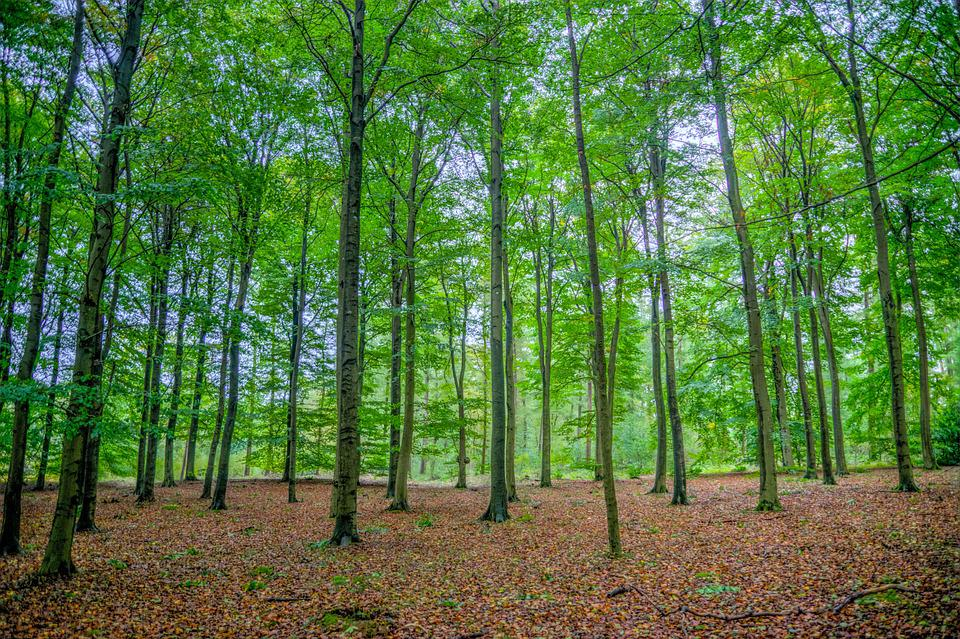 Green, Forest, Beech, Trees, Wood, Nature, Landscape