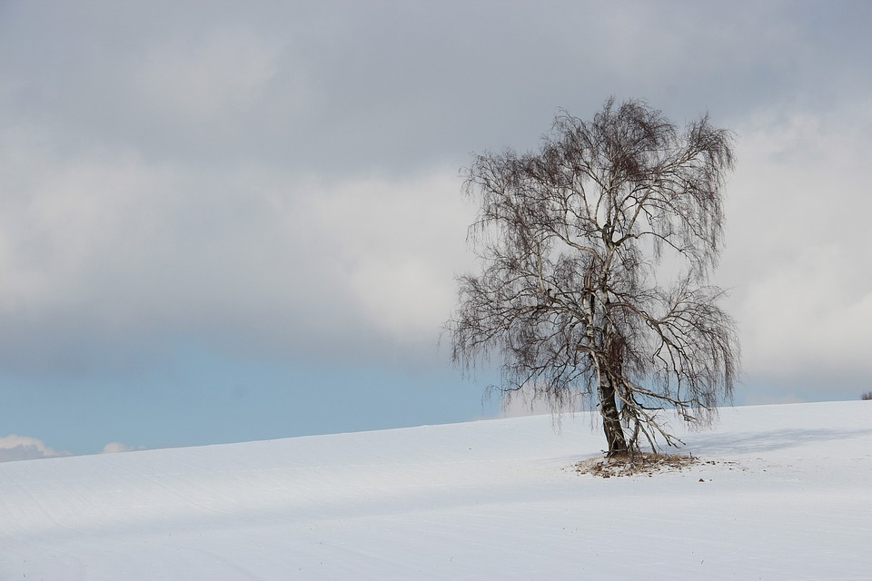 Winter, Tree, Landscape, Snow, Birch, Lonely, Wintry