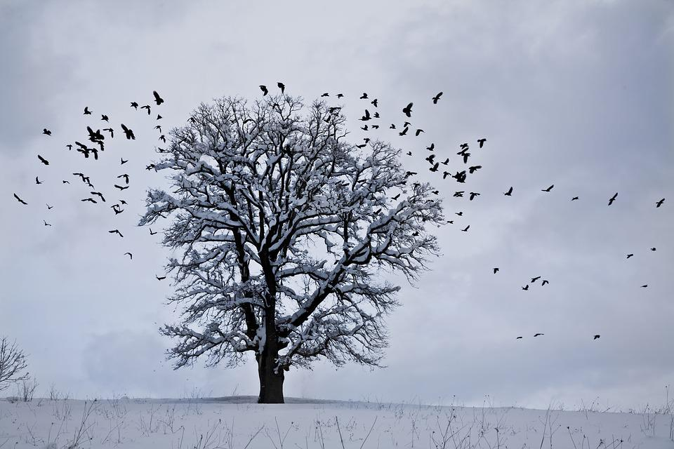 Snow, Winter, Landscape, Nature, Bird