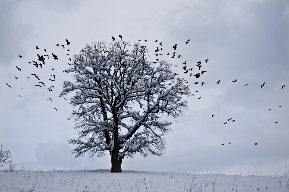 Snow, Winter, Landscape, Nature, Bird
