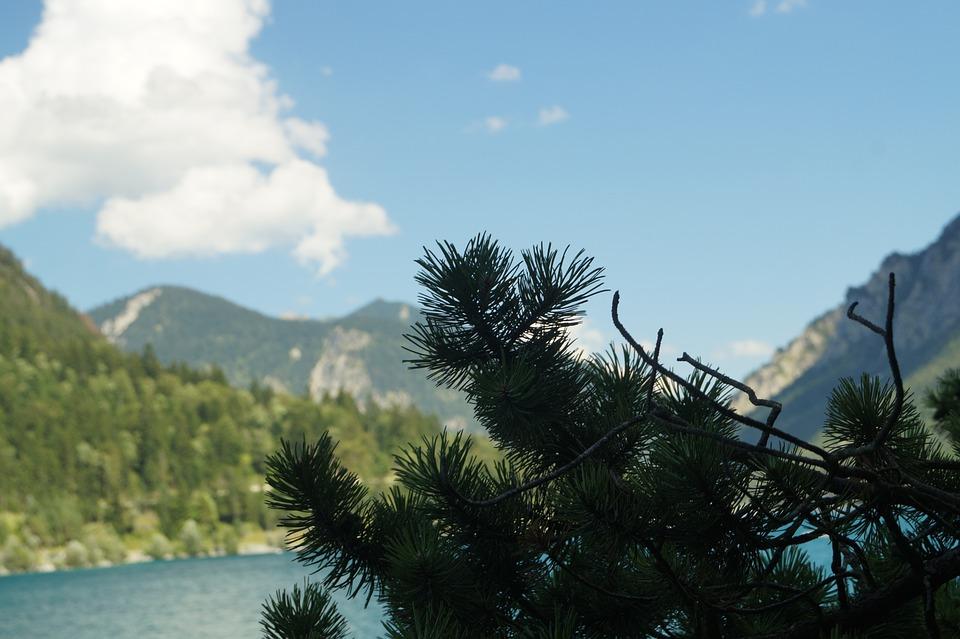 Lake, Mountains, Sky, Branch, Needles, Landscape