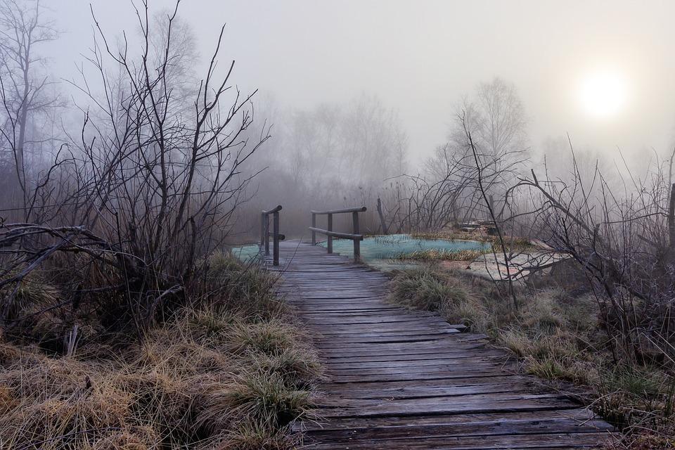 Bridge, Forest, Fog, Pond, Water, Landscape, Path