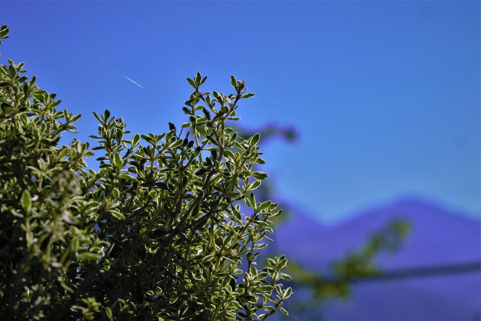 Nature, Bush, Plant, Spring, Garden, Landscape