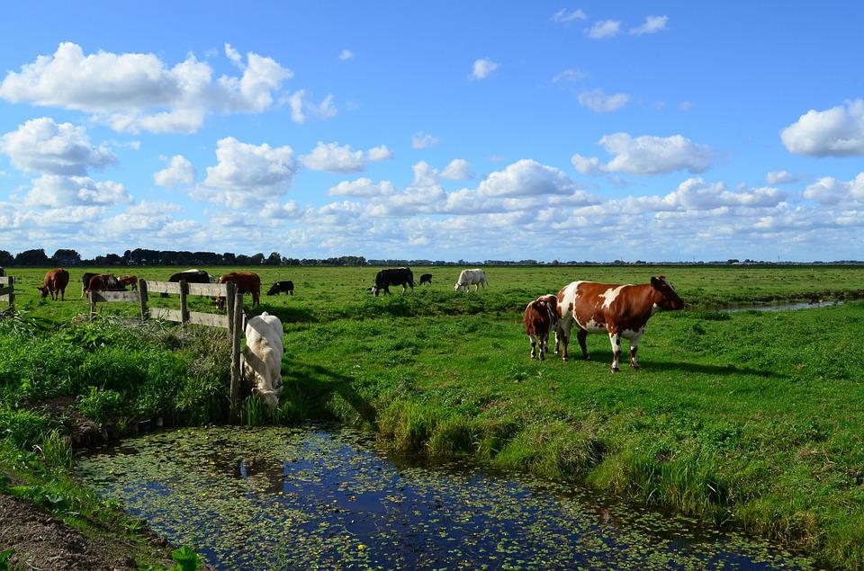 Landscape, Nature, Cattle, Countryside