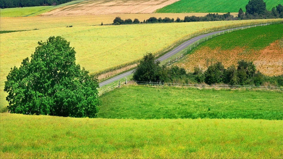 Landscape, Countryside, Road, Nature, Colourful, Field