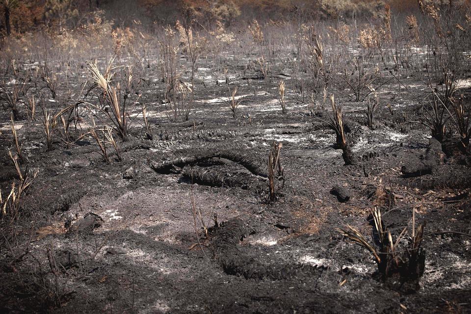 Burned, Landscape, Fire, Nature, Burn, Danger, Trees