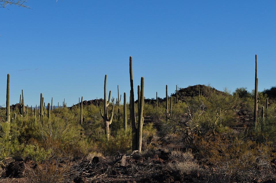 Desert, Cactus, Landscape, Nature, Journey, Adventure