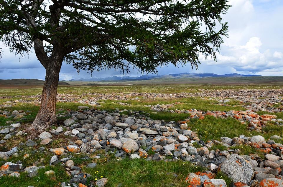 Tree, Mountains, Desert, Landscape, Stones