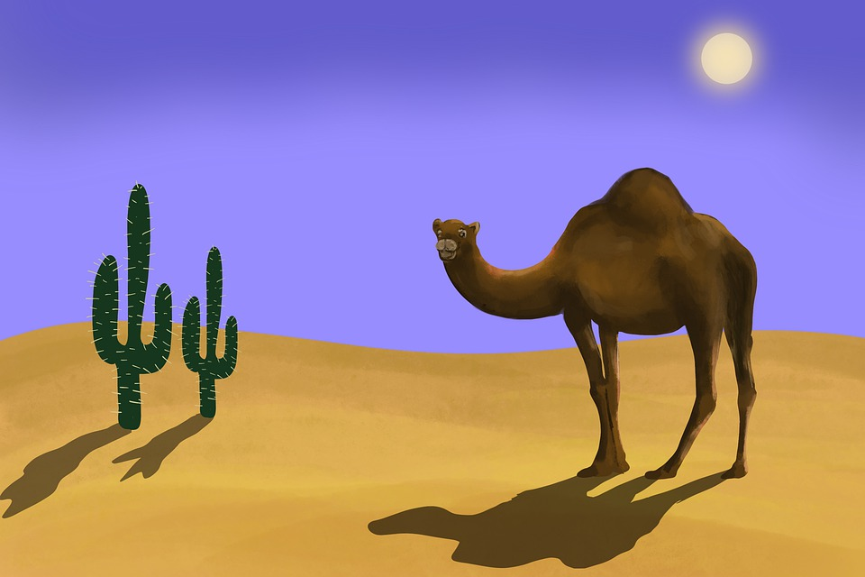 Camel, Desert, Sand, Dromedary, Landscape, Sahara, Hot