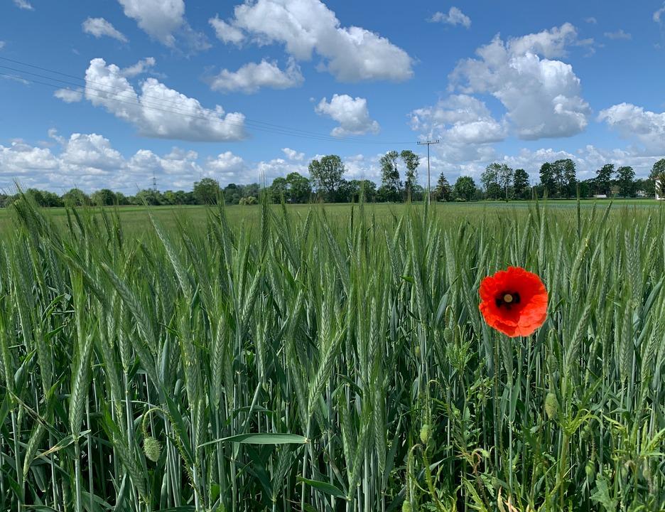 Poppy, Landscape, Sky, Clouds, Energy, Summer, Meadow