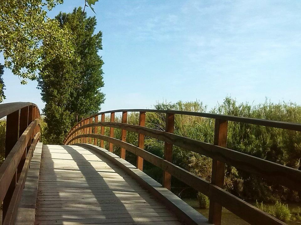 Bridge, Tree, Path, Entrepreneurship, Landscape, Nature