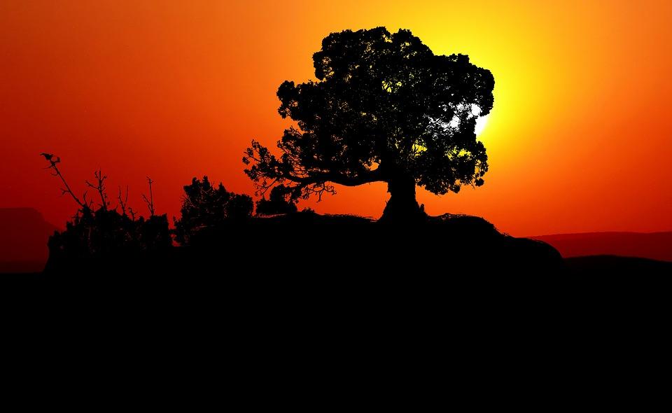 Sunset, Trees, Mountain, Landscape, Nature, Evening