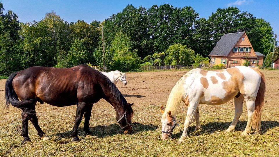 Horses, Pasture, Horse, Landscape, Stallion, Farm