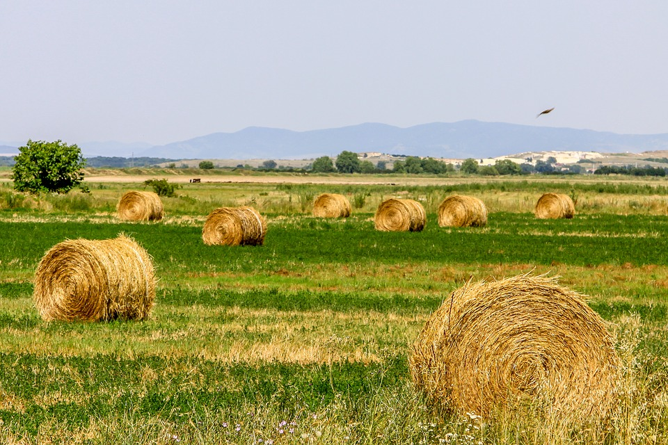 Land, Field, Agriculture, Nature, Landscape, Farm