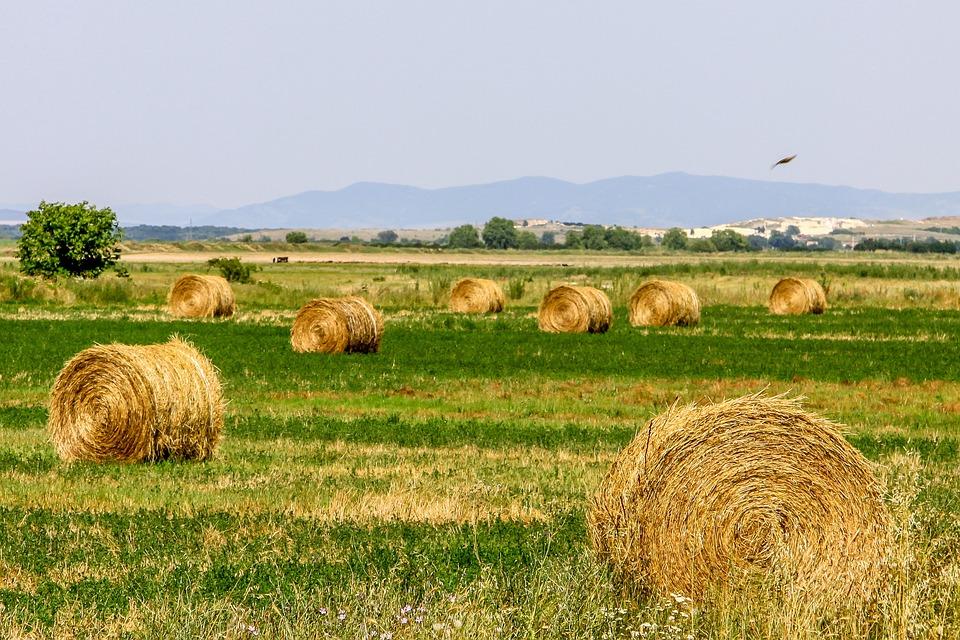 Land, Field, Agriculture, Nature, Landscape, Farm