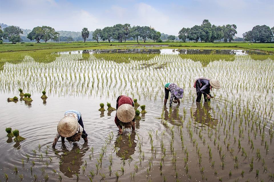 Field, Farmer, Rural, Water, Vietnam, Landscape