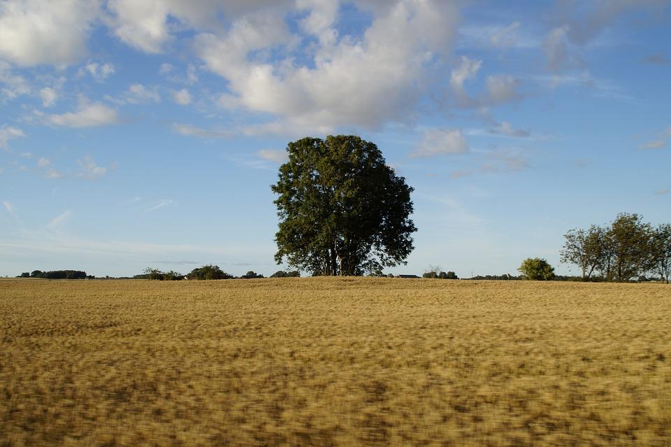 Landscape, Rural, Grain Fields, Agriculture, Field