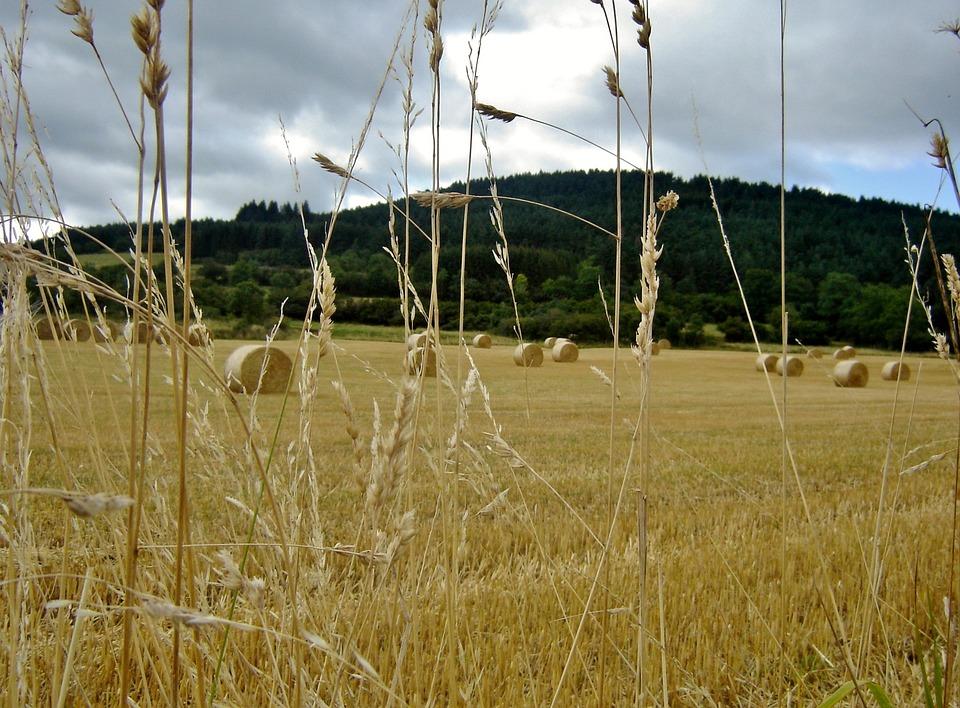 Fall, Field, Landscape, Harvest