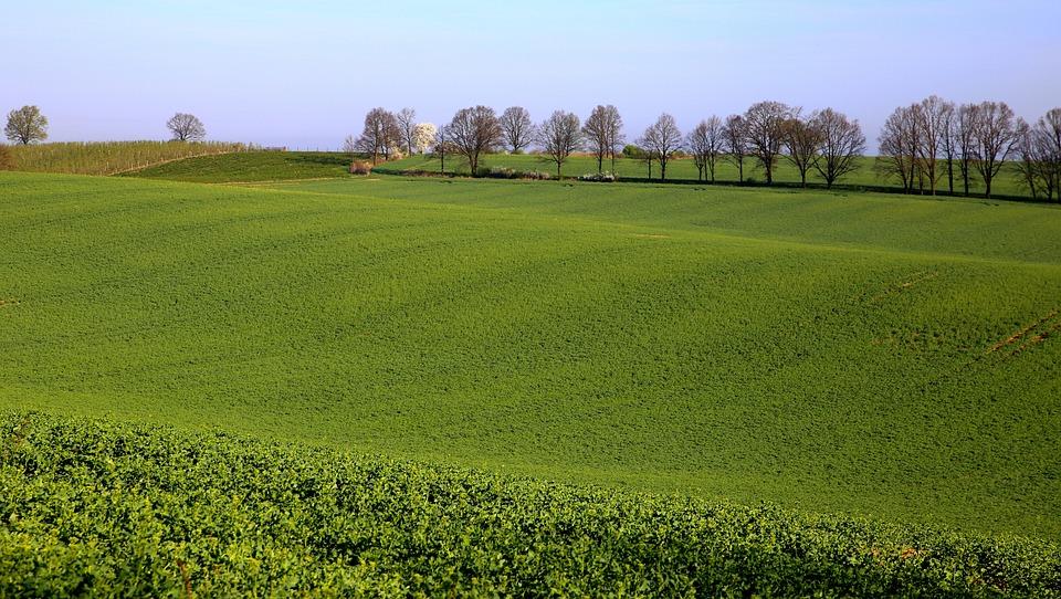 Mati, Nature, Landscape, Field, Tree, Village, Fields
